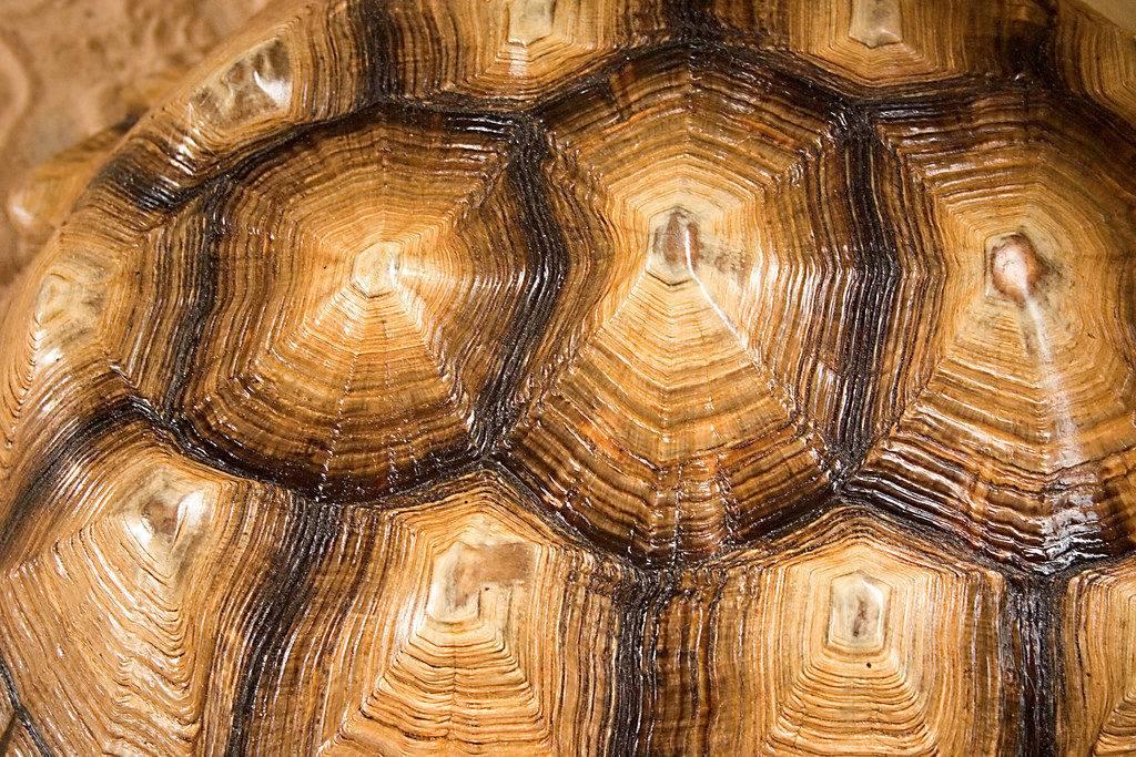 Панцирь черепахи макрофото