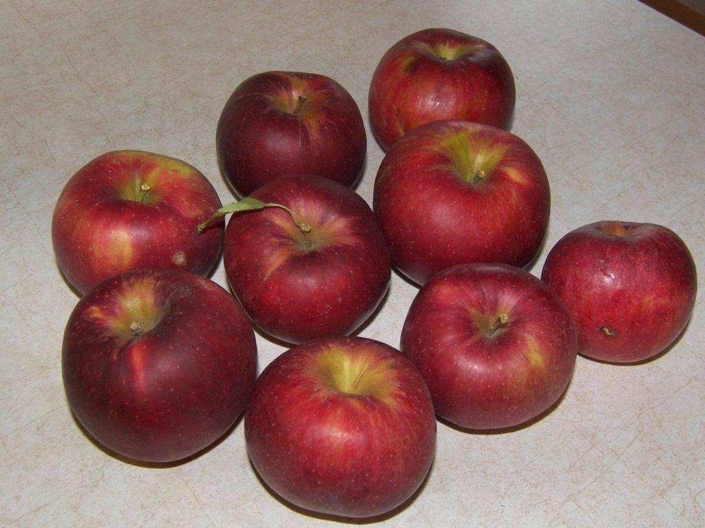 Полукарликовый сорт яблони Джонатан