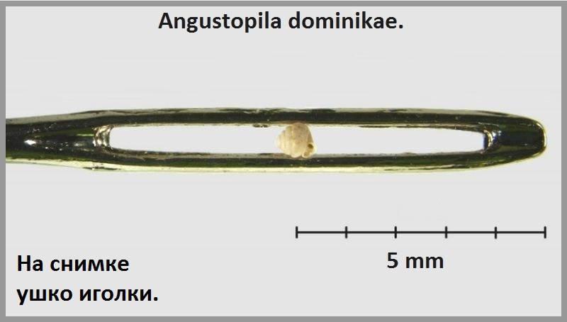 Самая маленькая улитка в мире фото