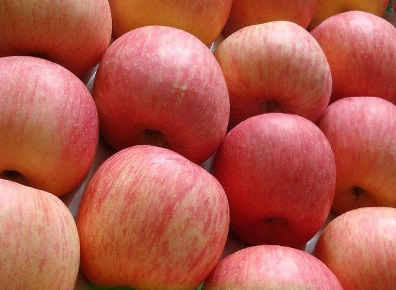 Сладкий сорт яблони Фуджи