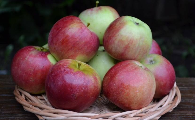 Сорт яблони Орловское полесье