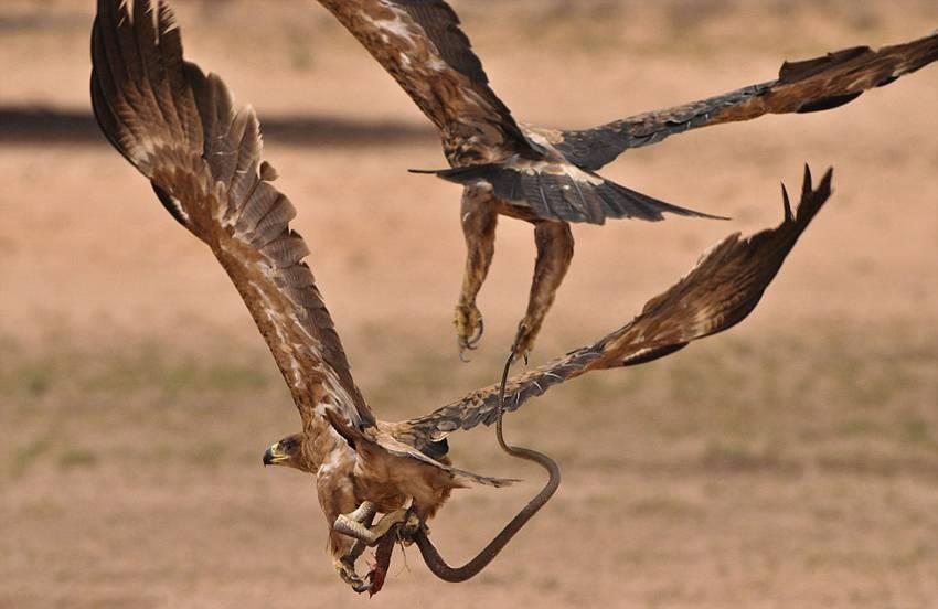 Фото орла с добычей