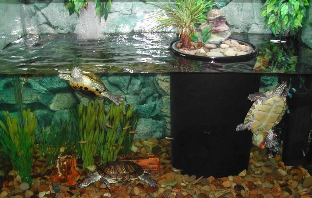 Аквариум для черепахи фото