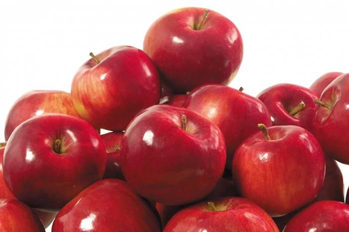 Высокозимостойкий сорт яблони Анис алый