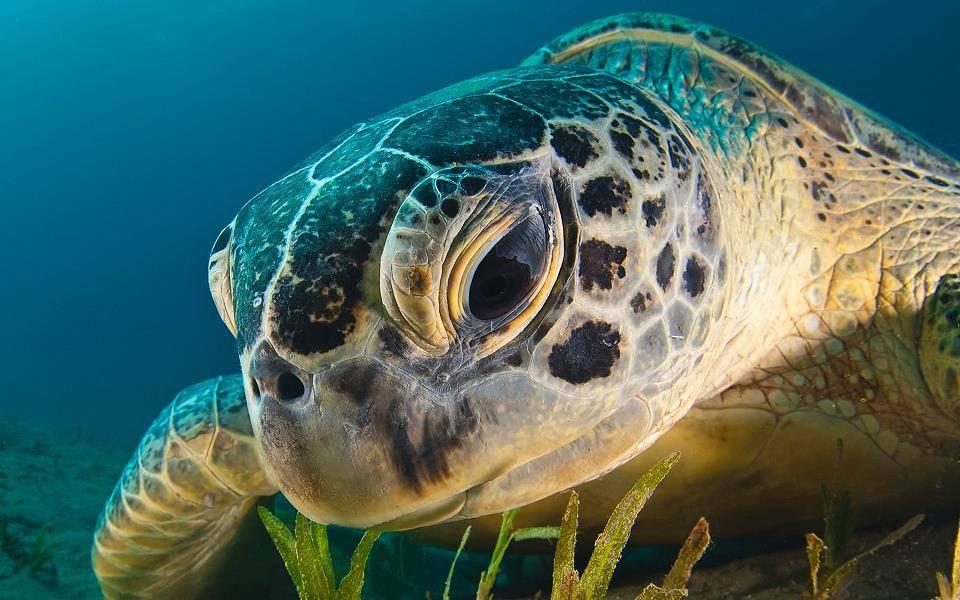 Глаза черепахи фото