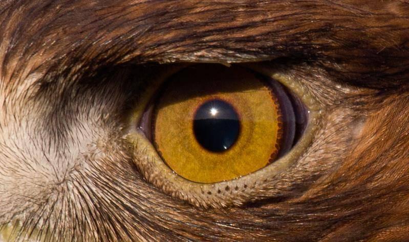 Глаз орла
