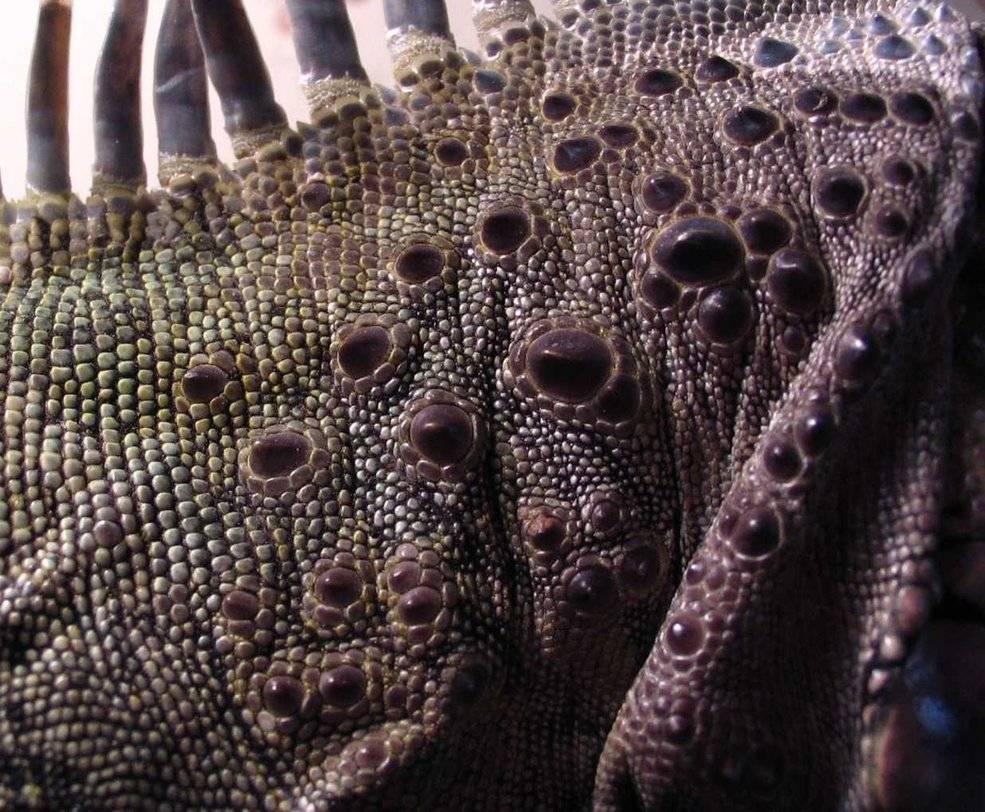 Кожа ящерицы фото