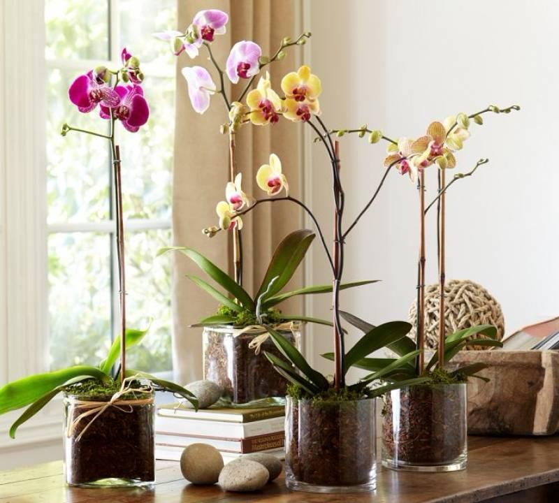 Красивые орхидеи фото