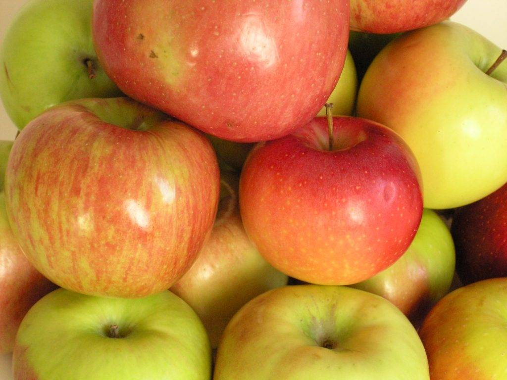 Низкозимостойкий сорт яблони Линда