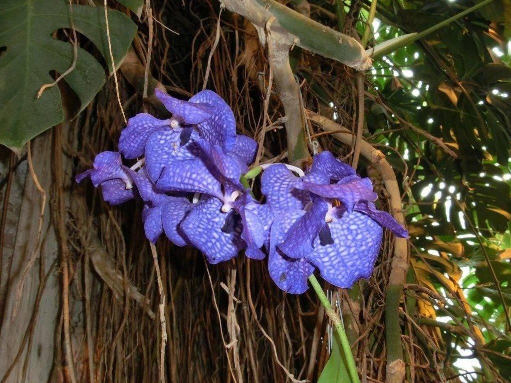 Орхидея эпифит
