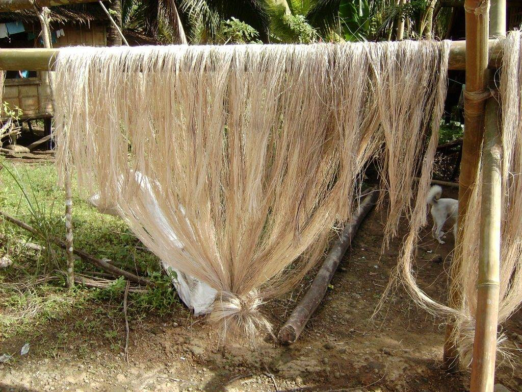 Волокно текстильного банана (абака)