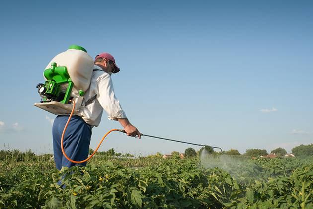 Как избавиться от колорадского жука химическими средствами