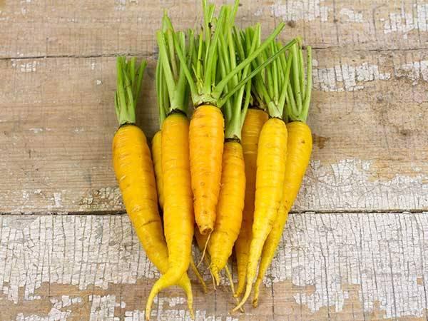 Кормовой сорт моркови Лобберихская желтая