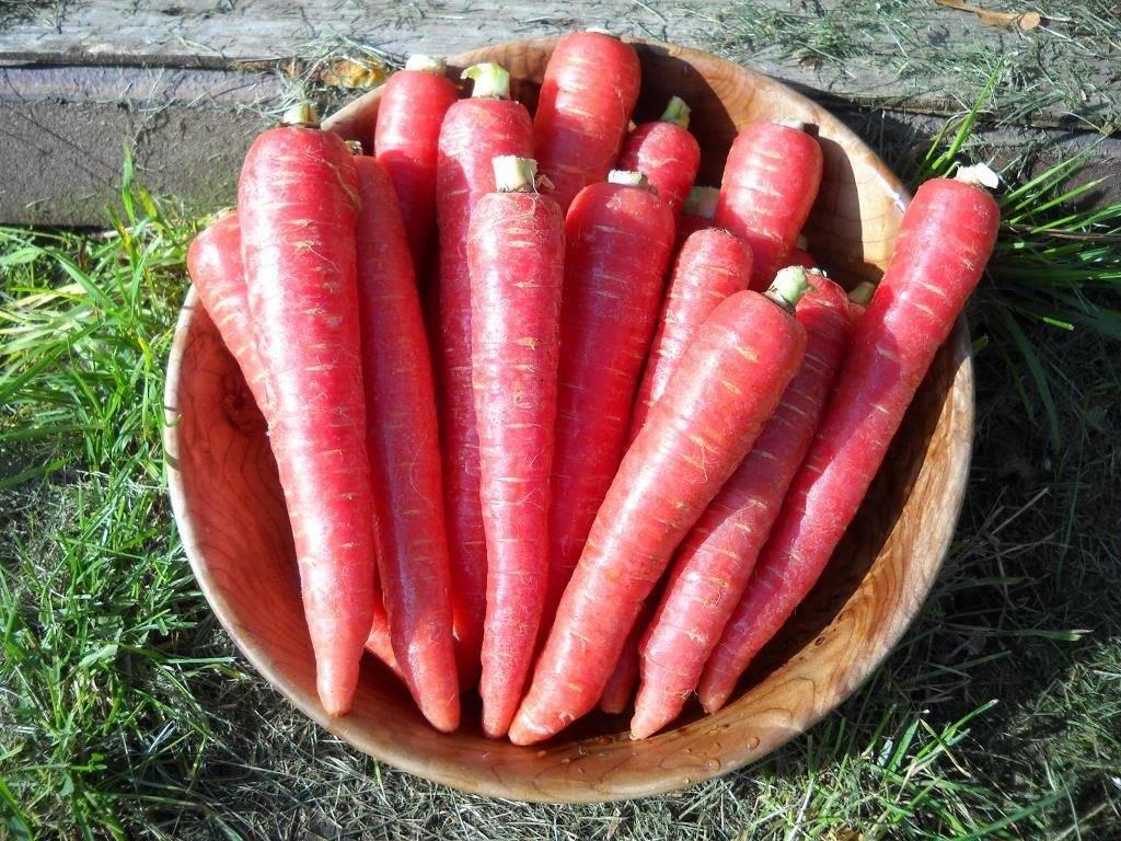 Красная морковь