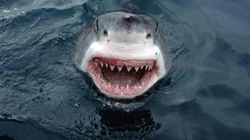 Пасть акулы фото