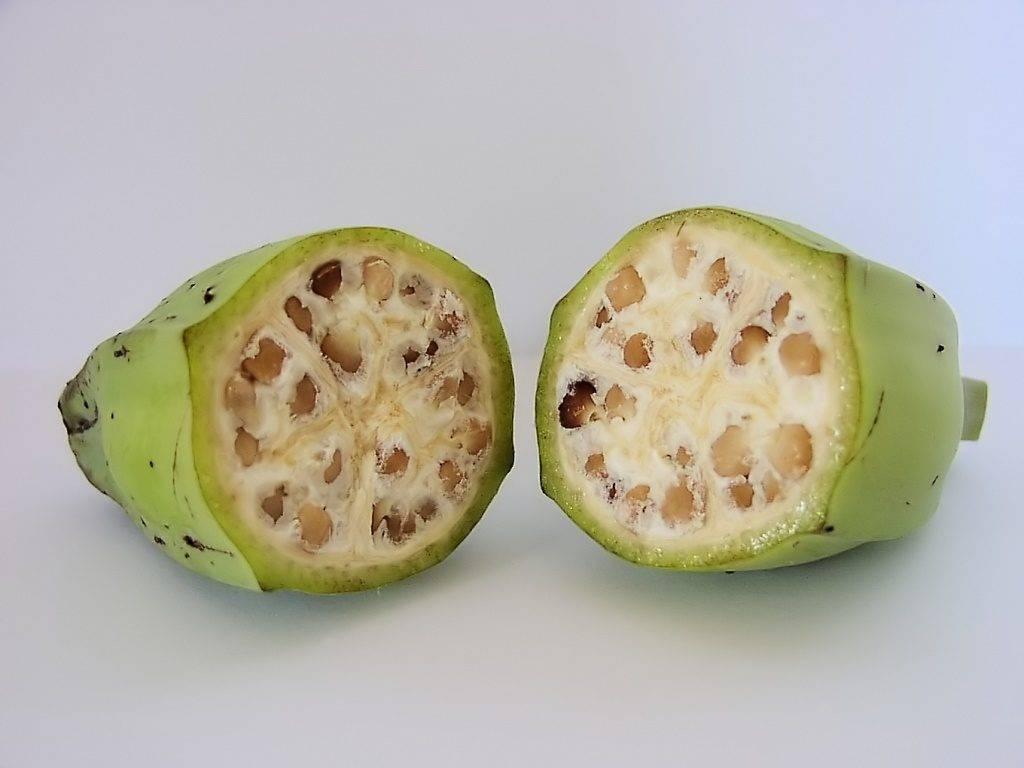 Плод банана Бальбиса
