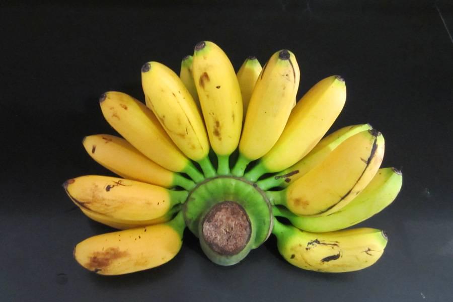 Сорт банана Дамский пальчик (Lady Finger)
