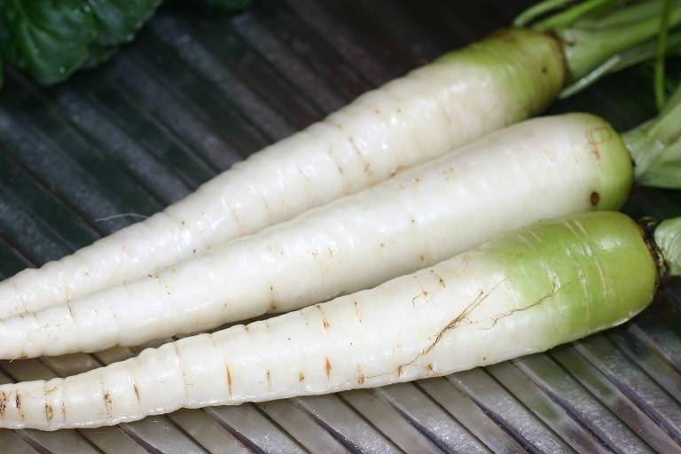 Белая морковь фото