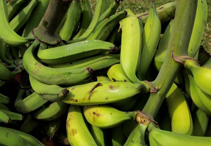 Зеленый банан (green banana)