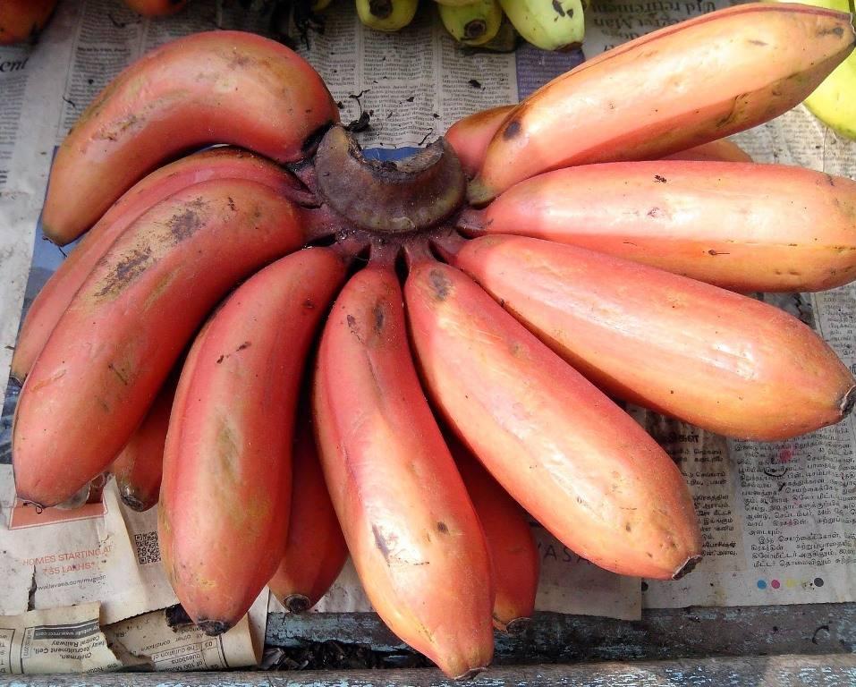 Маленькие красные испанские бананы (Red Spanish)
