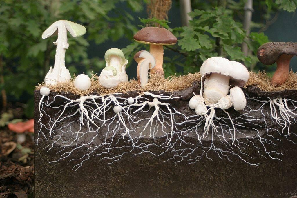 Выращивание грибов на дому белый гриб 19