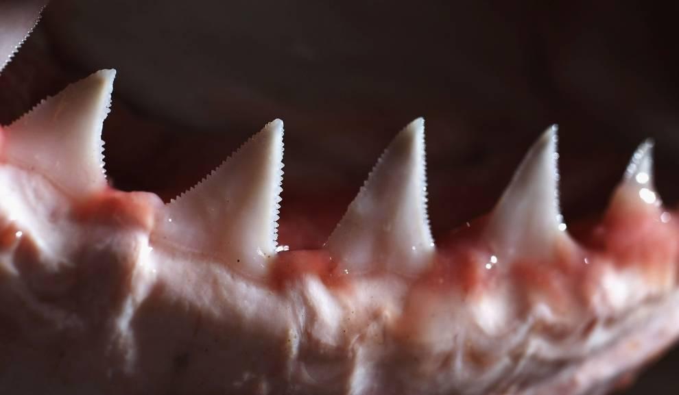 Острые зубы белой акулы
