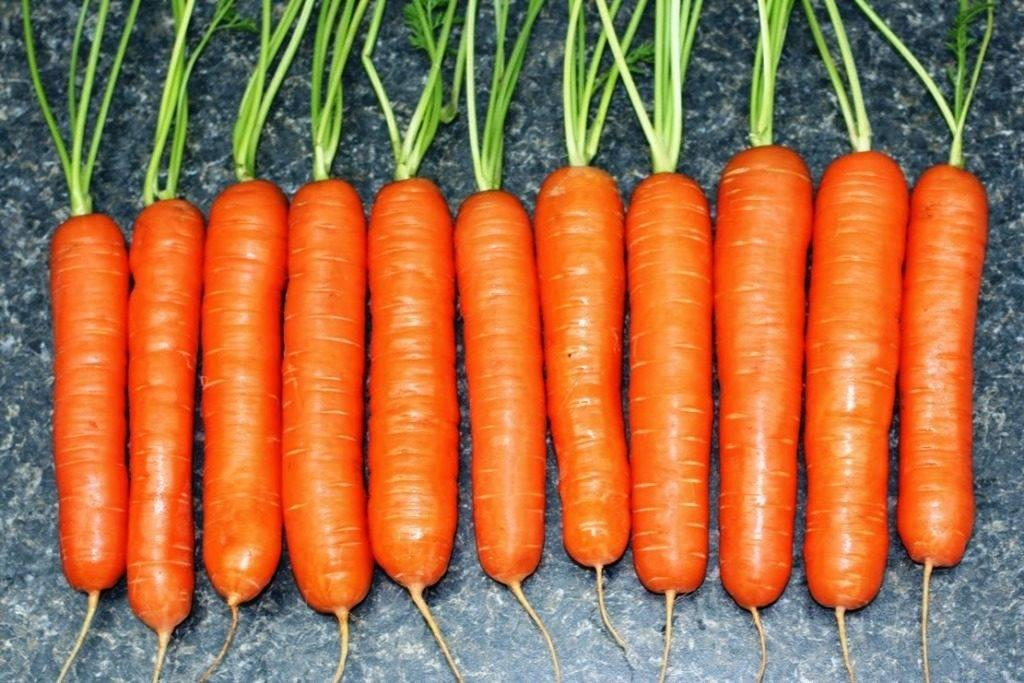 Поздний сорт моркови «Император»