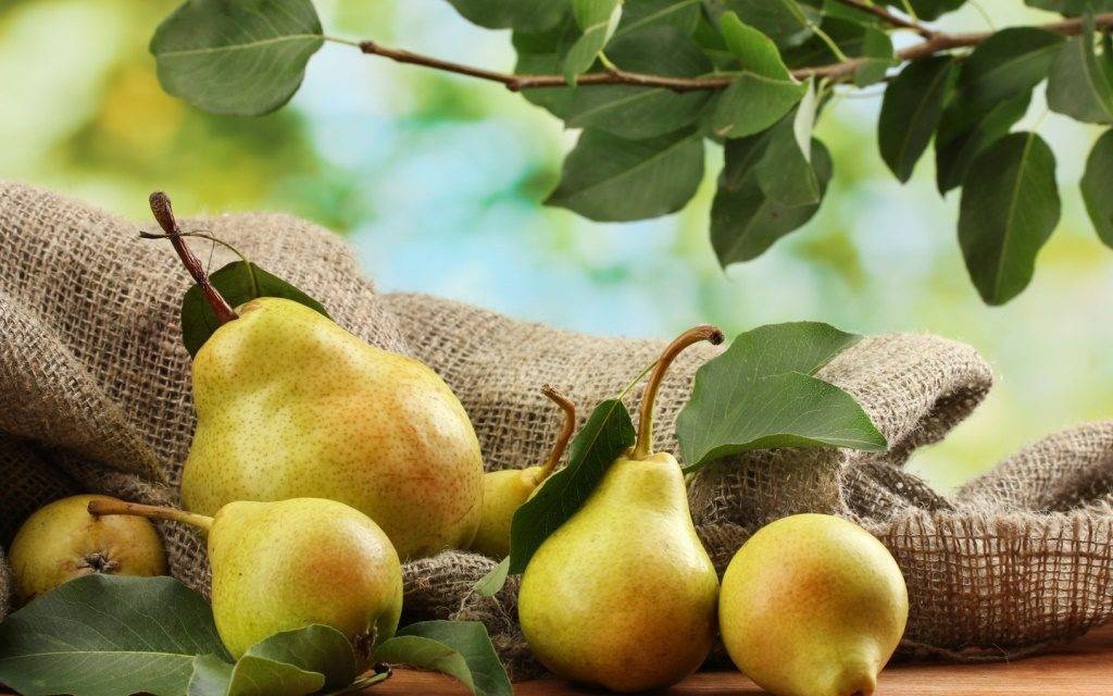 Польза груши для организма