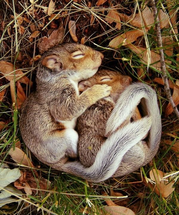 Спящие суслики фото