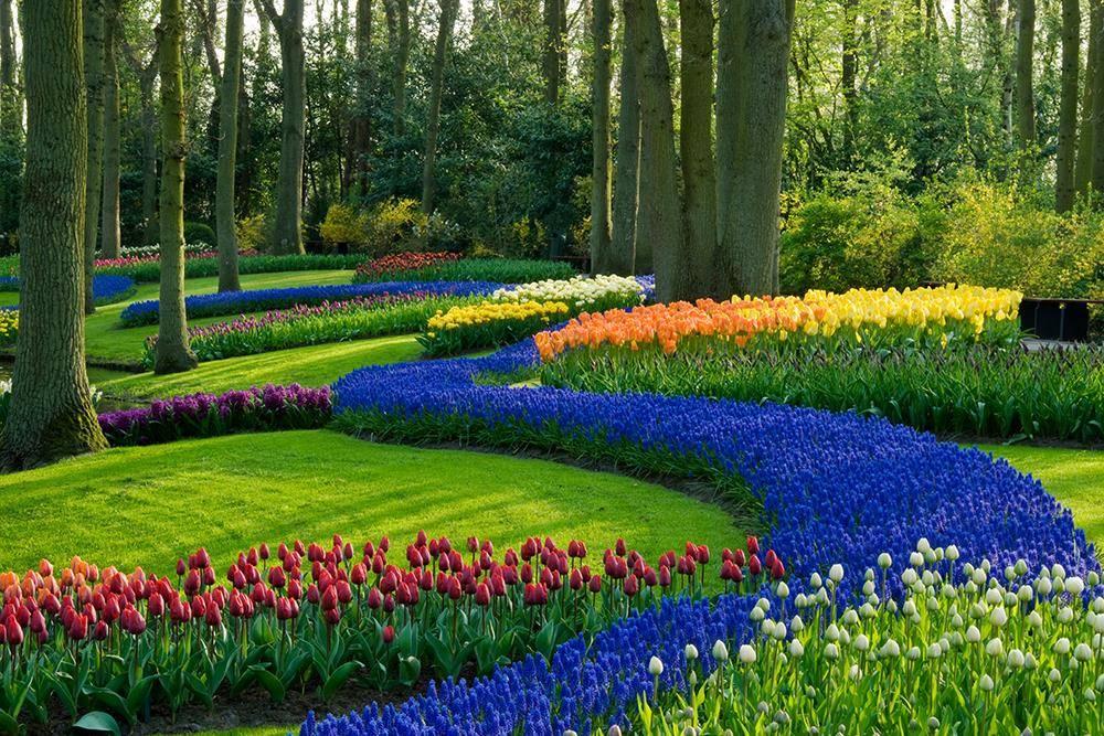 Картинки по запросу весна растут тюльпаны