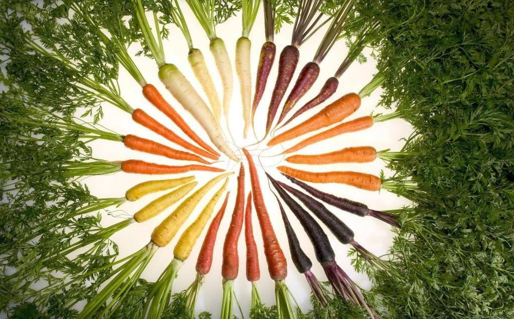 Цвет моркови фото