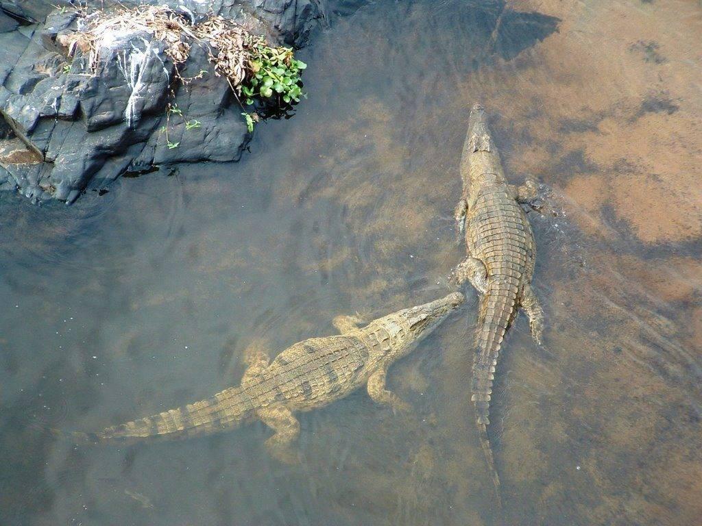 Где живут крокодилы