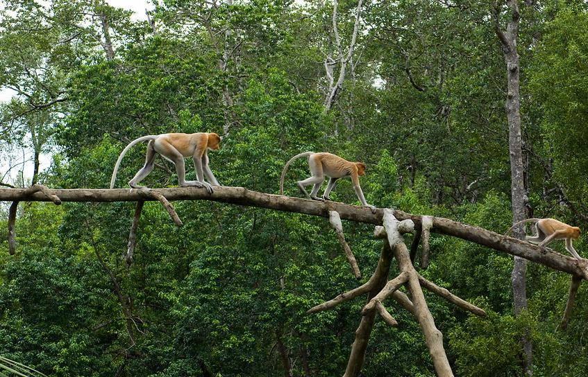 Где обитают обезьяны