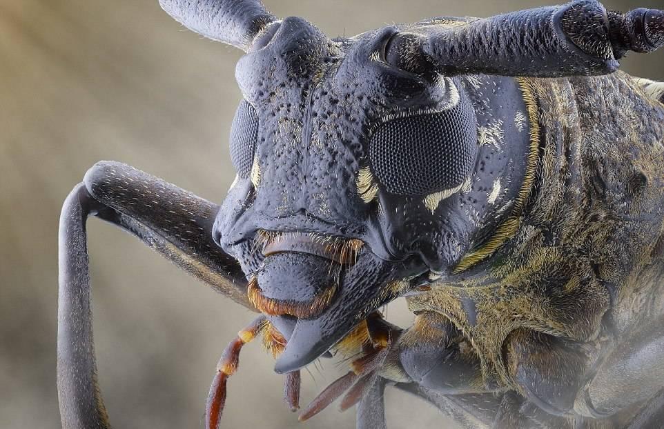 Глаза жука фото