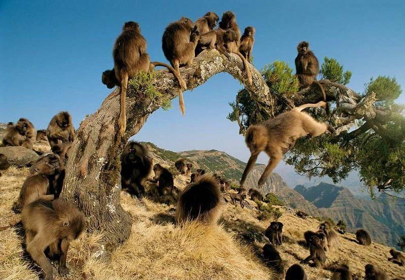 Жизнь обезьян в дикой природе