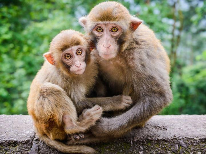 Как выглядит обезьяна фото