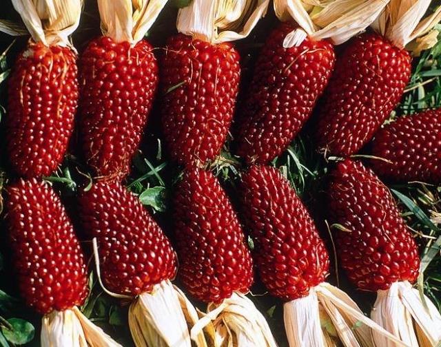 Кукуруза Земляничная