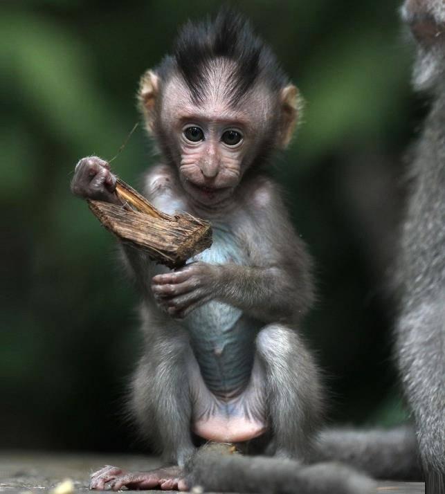 Новорожденная обезьяна фото