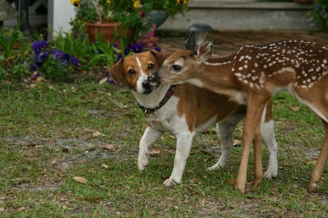 Олень и собака фото