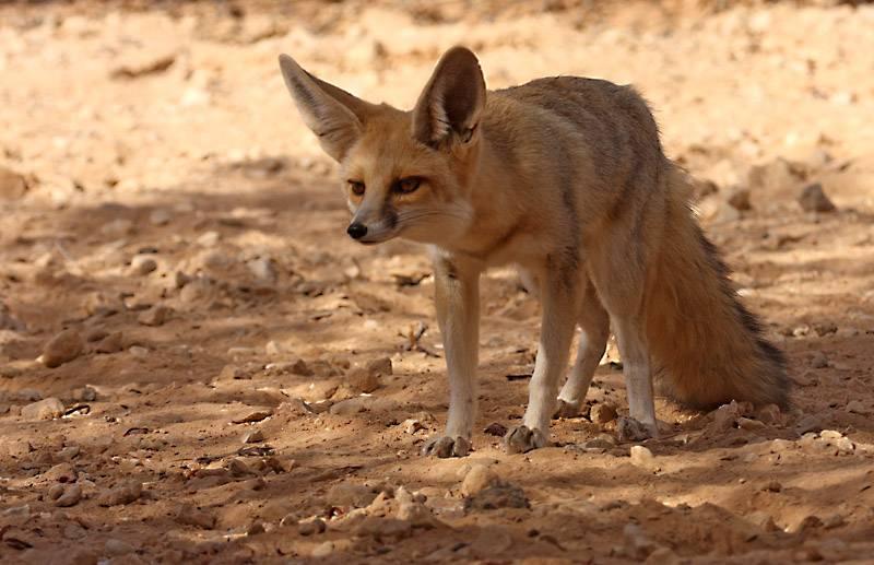 секты песочные картинки животные красной книги поздравление маме