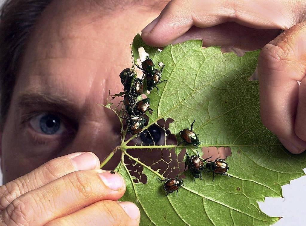 Пища жуков фото
