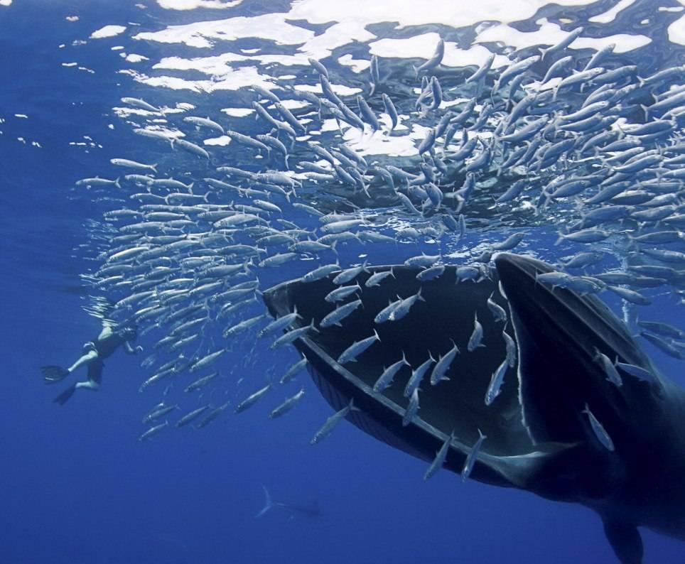 Пища китов