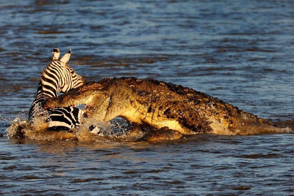 Пища крокодилов