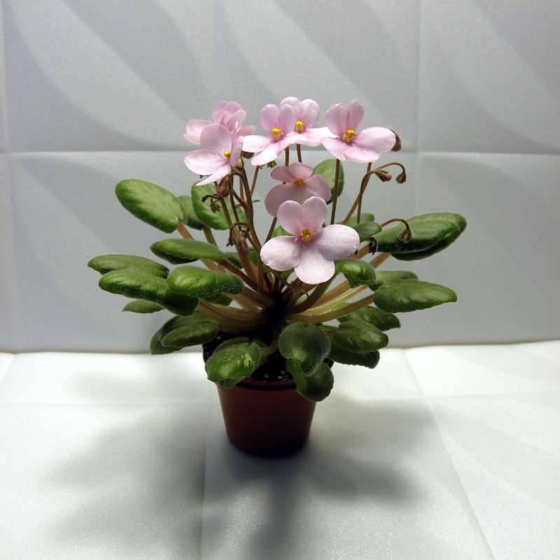 Фиалка розовая Midget Lilian