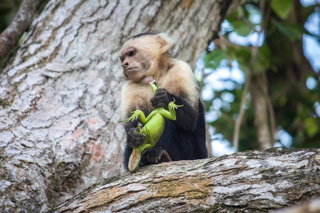Что едят обезьяны