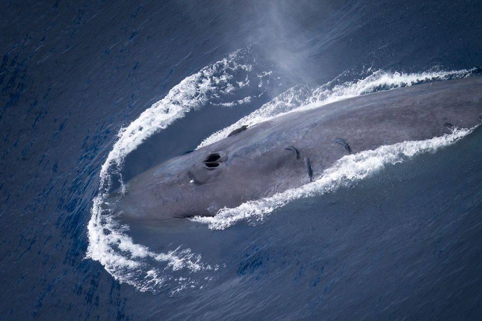 Большой кит фото
