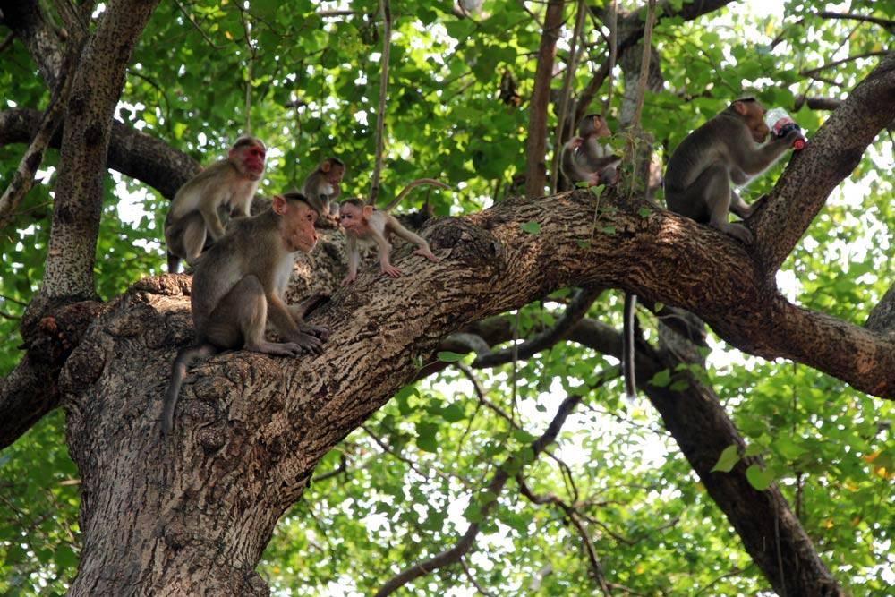 Где живут обезьяны