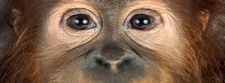 Глаза обезьяны фото