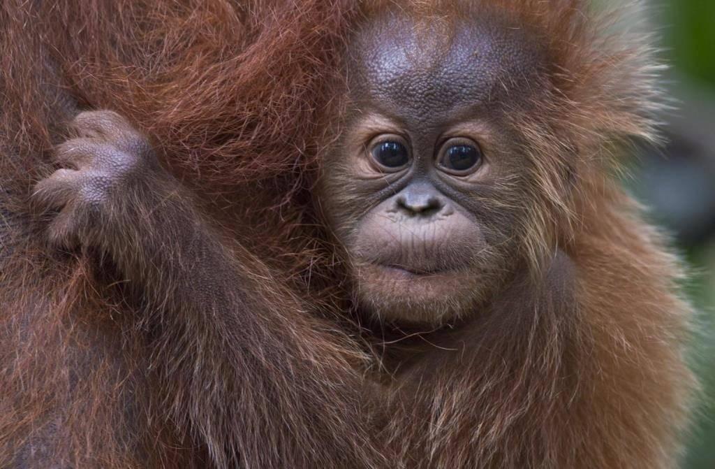 Детеныш обезьяны фото