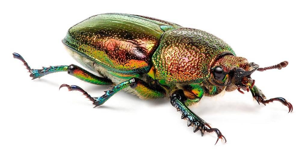 Картинки по запросу жук